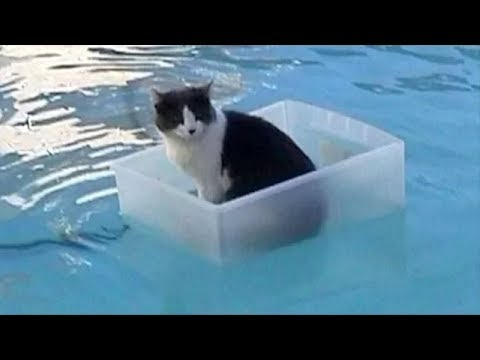 Cats Hate Water! - Funny Cats in Water Compilation 2019 - UCmGVACmVZuFYJHO8FDJrjAA