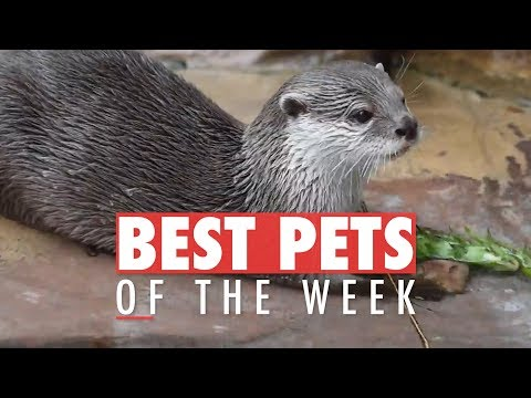 Best Pets of the Week | December 2017 Week 4 - UCPIvT-zcQl2H0vabdXJGcpg