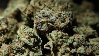Utah to scrap state-run marijuana dispensaries