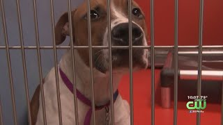 ACCT Philly Supporters Demand More Funding For Animal Shelter