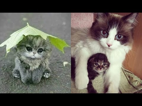 Cute baby animals Videos Compilation cute moment of the animals - Soo Cute! #17 - UC7KRL5eX0YVMC7PsdZzlzyQ