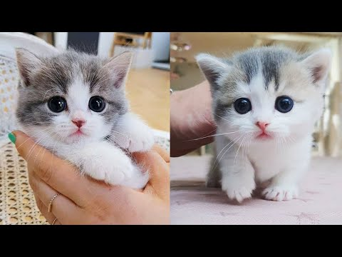 Baby Cats - Cute and Funny Cat Videos Compilation #38 | Aww Animals - UC8hC-augAnujJeprhjI0YkA