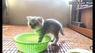 Kittens Jump In Basket !