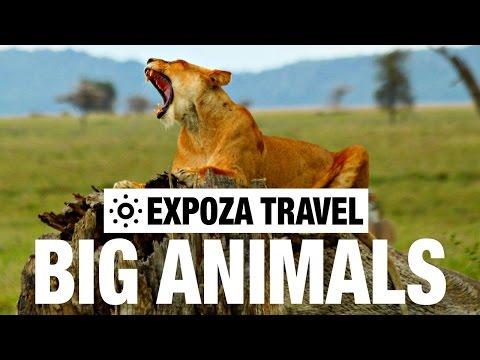 Big Animals (Africa) Vacation Travel Video Guide - UC3o_gaqvLoPSRVMc2GmkDrg