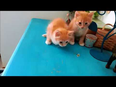 Cute kittens - UCMkjfVx0IY6lpaoY4iF9tkg