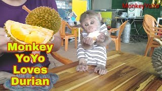 Monkey Baby . YoYo is eating durian and he loves durian