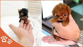Baby Dogs 👀puppy ​​compilation video (2019) Funny Pet Videos