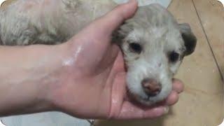#流浪狗  把小灰狗洗成小白狗,原来可以这么好看。