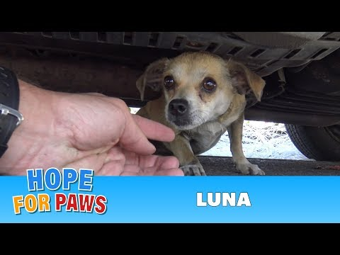 How a little microchip changed this dog's life!!!  Please share this important video. - UCr8oc-LOaApCXWLjL7vdsgw