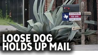 Loose dog scared off mail carrier until THIS happened