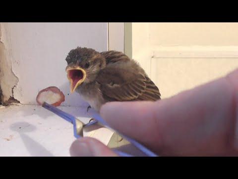 Micro sparrow - UCTXOorupCLqqQifs2jbz7rQ