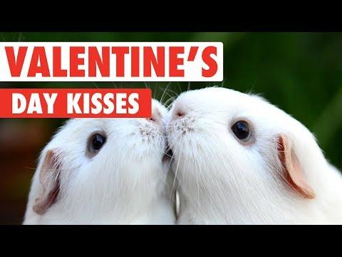 Valentine's Day Kissy Pets | Love Is In The Air - UCPIvT-zcQl2H0vabdXJGcpg