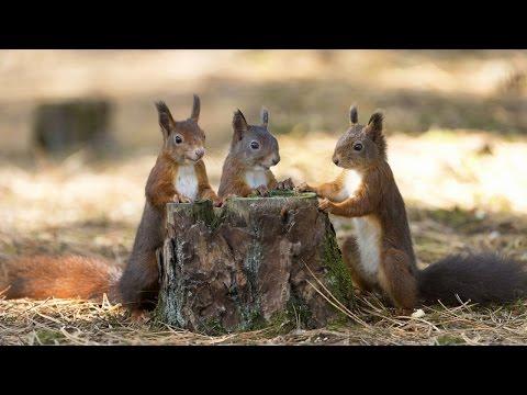 DIY Squirrel Feeders Ideas (homemade) - UCPRZAan7WcHjyDgDnpWy-ug