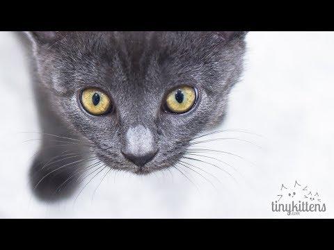 LIVE: Stanley the Tiny Kitten - TinyKittens.com - UCeL2LSl91k2VccR7XEh5IKg