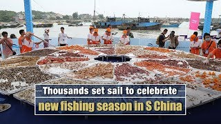 Live: Thousands set sail to celebrate new fishing season in S China 防城港市庆祝开海节 千帆起航