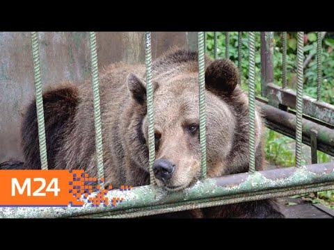 На пляже в Челябинске держат медведя в клетке без еды и воды - Москва 24