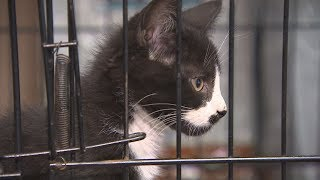 Humane Society waiving or lowering fees for 79 cats and kittens seized from Regina home