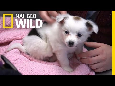 A Small Puppy Gets a Check-Up | The Incredible Dr. Pol