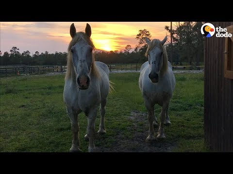 Rescued Carriage Horses Look SO Happy and Healthy Now | The Dodo
