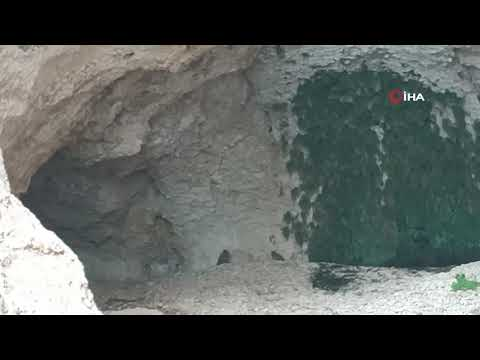 Kanyonlar, Yaban Hayatına Ev Sahipliği Yapıyor
