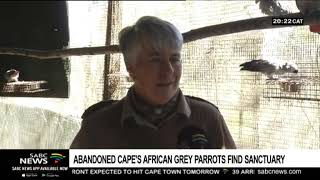 Sanctuary for abandoned Cape's African Grey Parrots