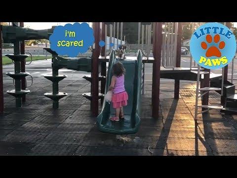 Funny Puppy and Baby Playing on Slides | Funny & Cute - UC3PitqPlZKyfYN3qAuwONVg