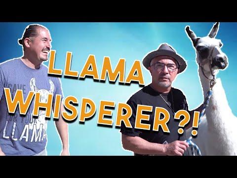 The Llama Whisperer, Cesar Millan