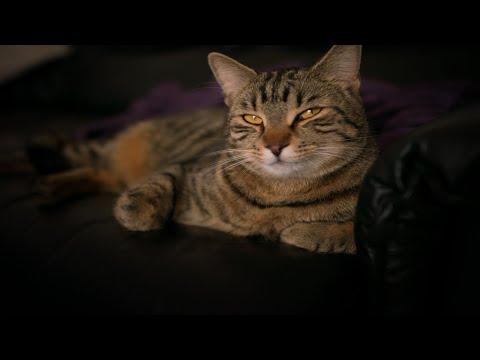CAT DAY IN QUARANTINE