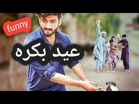 Mal mandi Eid video bakra || zindabad vines ||