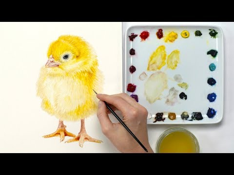 How to paint a realistic Easter chick in watercolour with Anna Mason