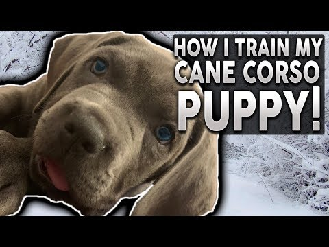 HOW TO TRAIN YOUR NEW PUPPY! Step by Step Guide!