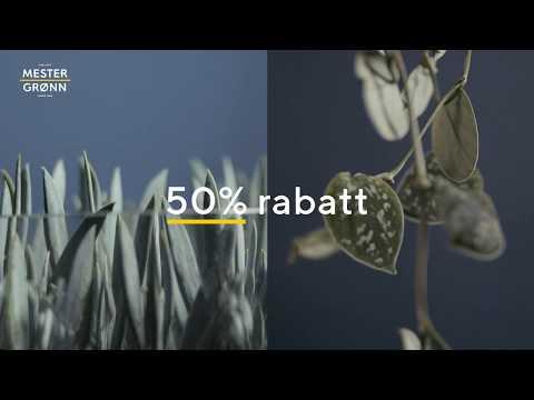 50 % på grønne planter - klikk & hent