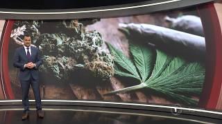 Hikurangi Cannabis welcomes proposed regulations for medicinal cannabis