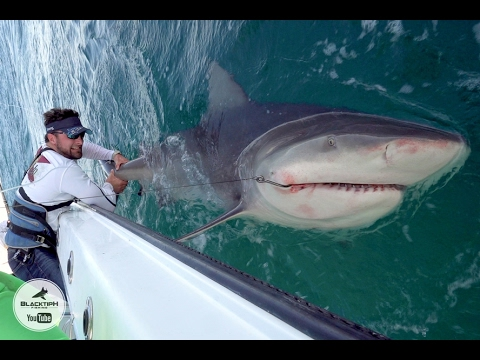Powerlifter vs Giant Bull Shark