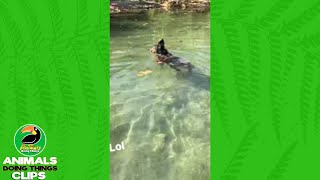 Funny Doggy Paddling | Animals Doing Things Clips