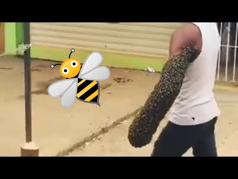 Guy Walks With Swarm of Bees On His Arm