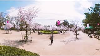 HANDA360° 半田の桜