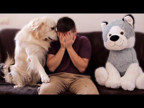 That's why a real dog is better than a stuffed dog toy!