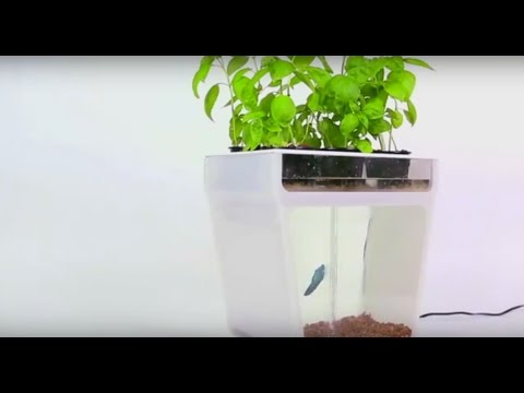 Water Garden Introduction on Kickstarter