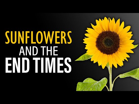 The End Time Sunflower Prophecy
