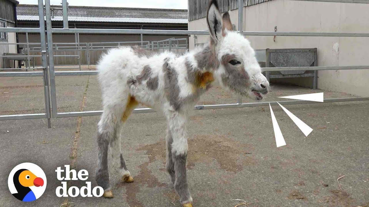 Orphaned Baby Donkey Cried For Days Until He Found A New Mom | The Dodo