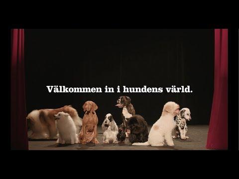 MyDOG - Välkommen in i hundens värld