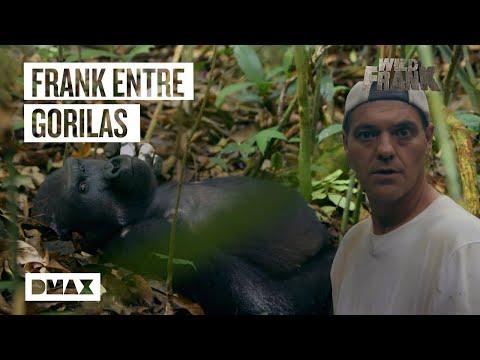 Los 5 mejores momentos de Wild Frank junto a los gorilas | Wild Frank