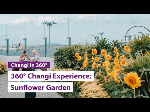 The Sunflower Garden 360° Changi Experience