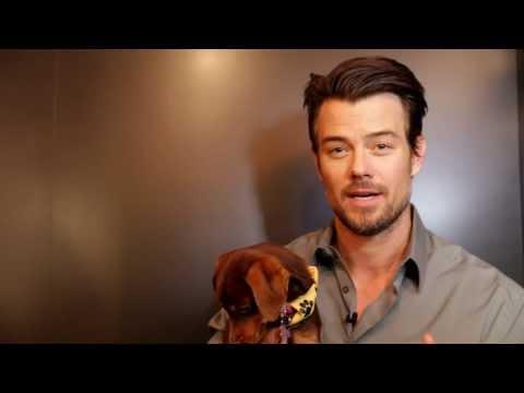 Pedigree 'Sundance Storytelling Suite' Ad