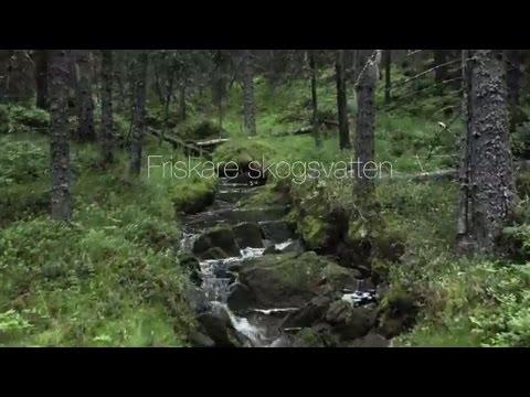 Friskare skogsvatten