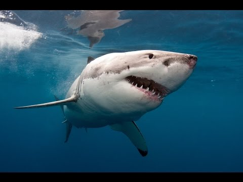 Professional Surfer Greg Long's Close Encounter With a Shark