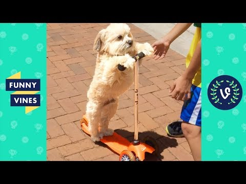 TRY NOT TO LAUGH - FUNNY ANIMALS | Funny Videos March 2019