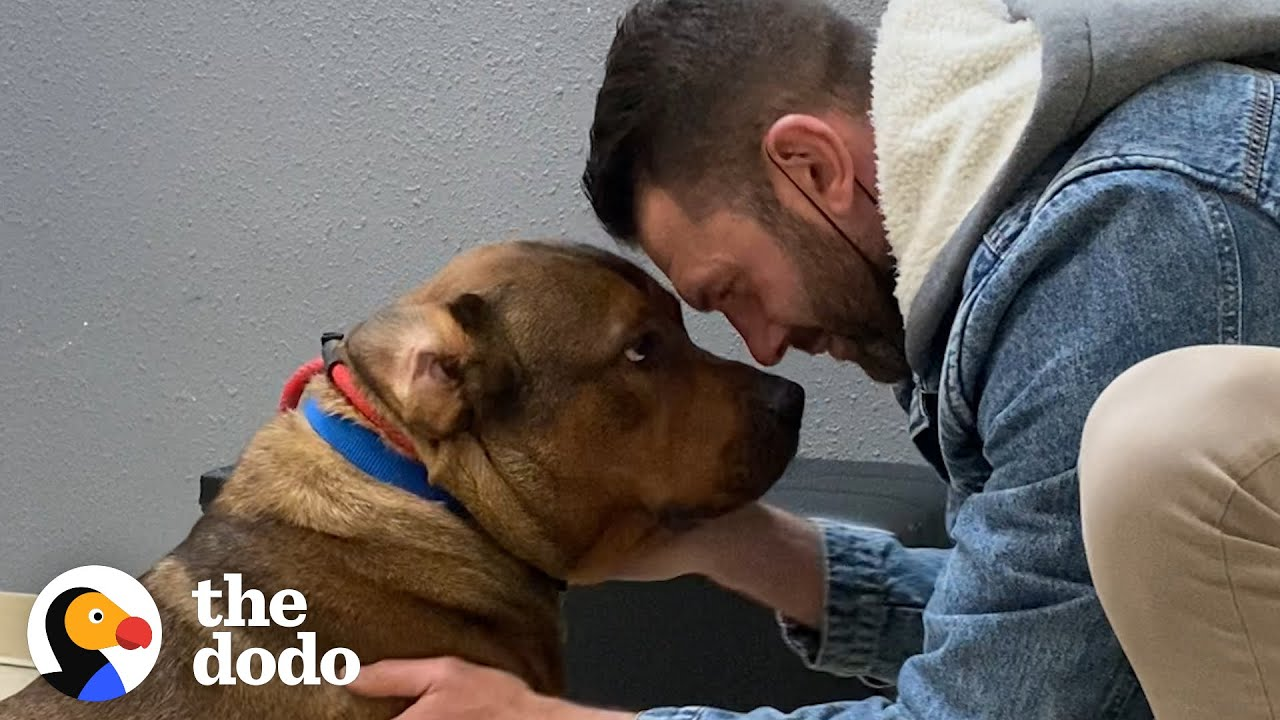 Guy Thought He Was Meeting A 'Very Aggressive Dog'… | The Dodo Foster Diaries