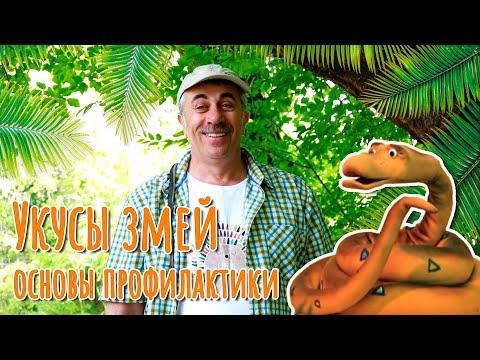 Укусы змей: основы профилактики - Доктор Комаровский